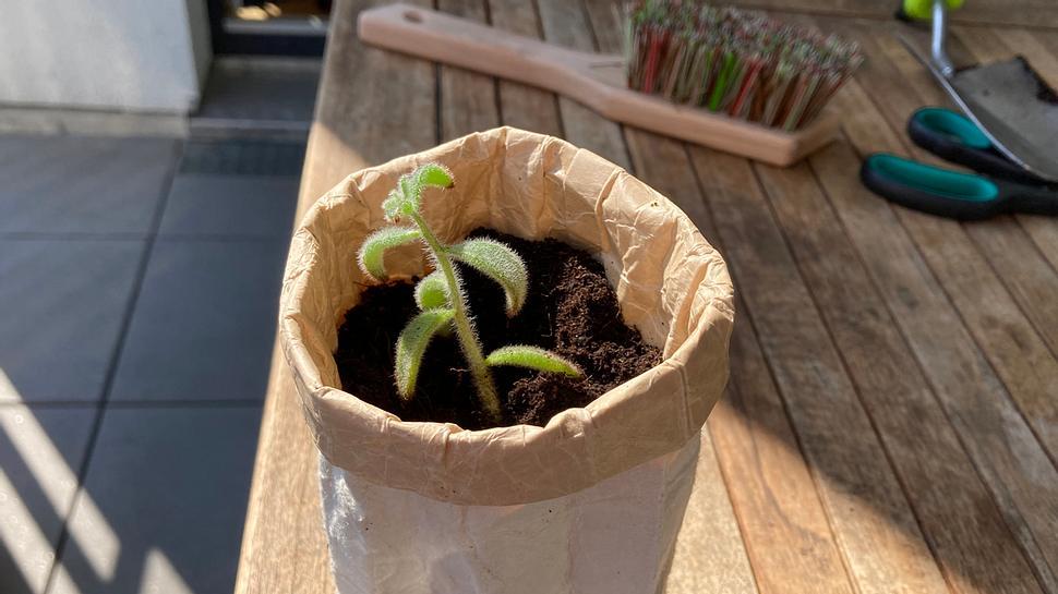 Tetrapak-Upcycling: Basteln mit Tetrapak - so entsteht schnell ein nachhaltiger Blumentopf - Foto: Jan Wälder