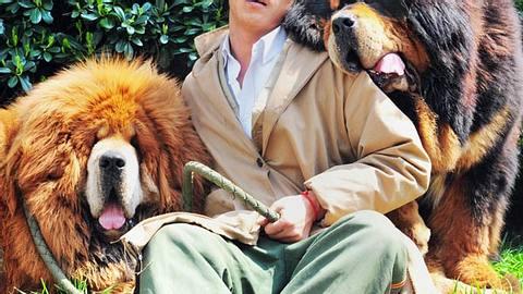 teuerster hund der welt b - Foto: Getty Images