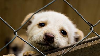 Viele Tierheime sind schon jetzt überlastet. - Foto: istock/ Sparveriuspict