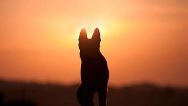 Wenn Hunde gehen: Die gefühlvollsten Trauersprüche für Hunde - Foto: anjajuli/iStock