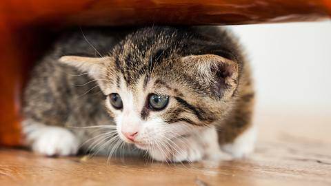 In den USA fordert eine Frau ihren Freund auf: Entweder ich oder die Katze. - Foto: lopurice/istock