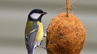 Vogelfutter ist ganz leicht selber zu machen. - Foto: iStock/Jellybean49