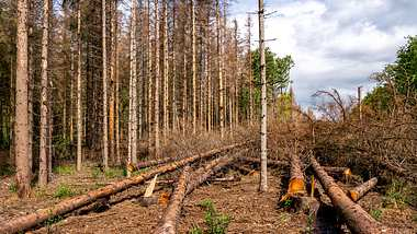 Experten schauen mit Sorge auf die Entwicklungen der Wälder in Deutschland. - Foto: Jochen Tack/ imago images