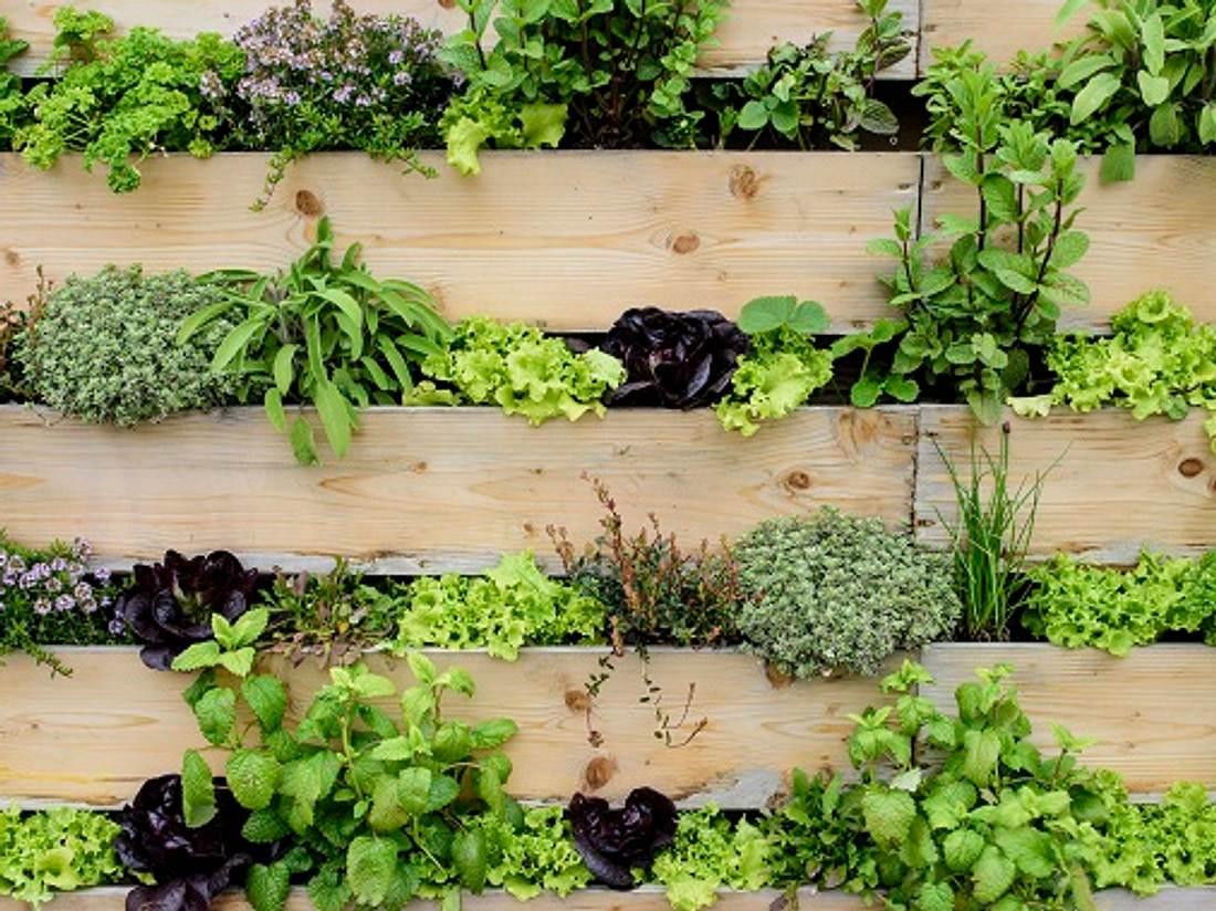 Wandgarten aus Holz