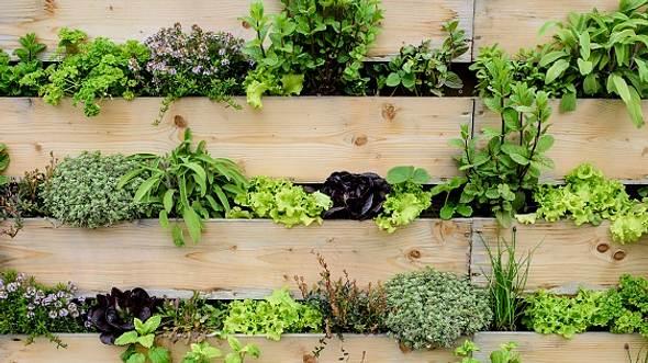 Wandgarten aus Holz - Foto: iStock/wayra