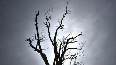 was tod im traum bedeutet - Foto: Thinkstock