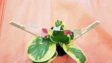 Wimpelkette basteln: So bastelst du Deko für Blumen und Kuchen - Foto: Redaktion