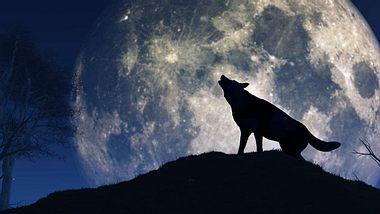 Der erste Vollmond des Jahres trägt den Namen Wolfsmond. - Foto: iStock